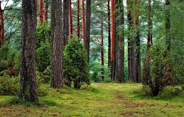 Jak spacer po lesie wpływa na zdrowie?
